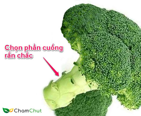 chon-bong-cai-xanh-co-phan-cuong-ran-chac